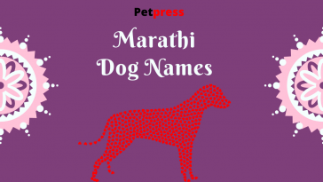 marathi-dog-names