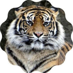 create the best tiger name from this generator