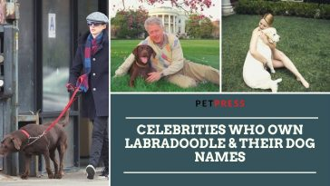 celebrities-who-own-labradoodle