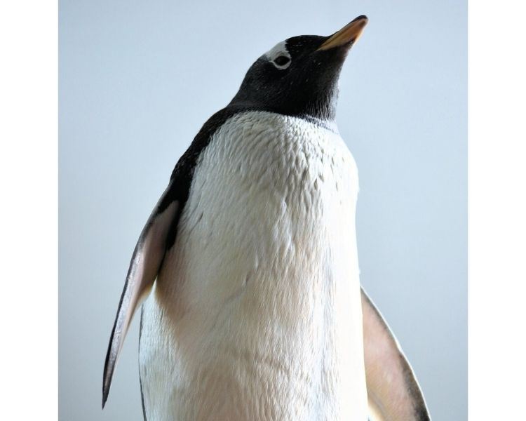 penguin name generator for a big penguin