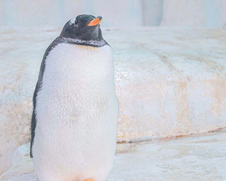 penguin name generator for a big penguin
