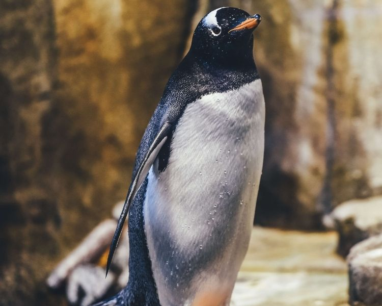 penguin name generator for a big female penguin