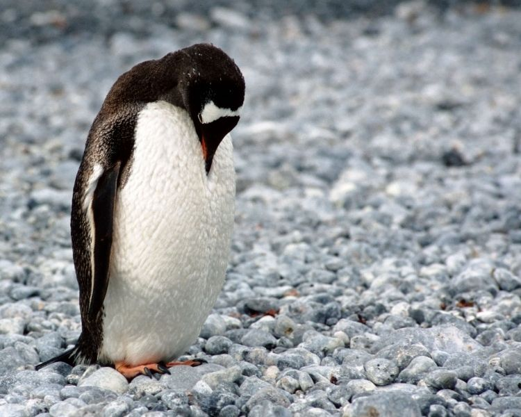 penguin name generator for a medium female penguin
