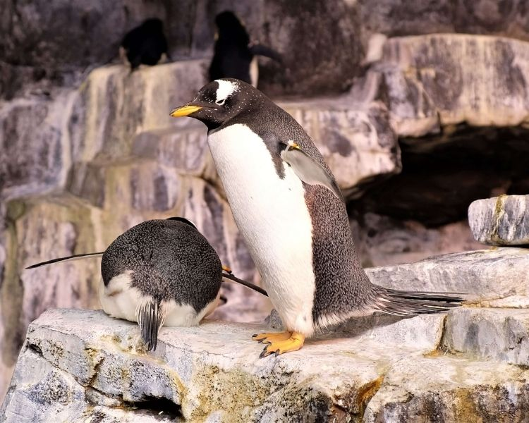 penguin name generator for a pet penguin