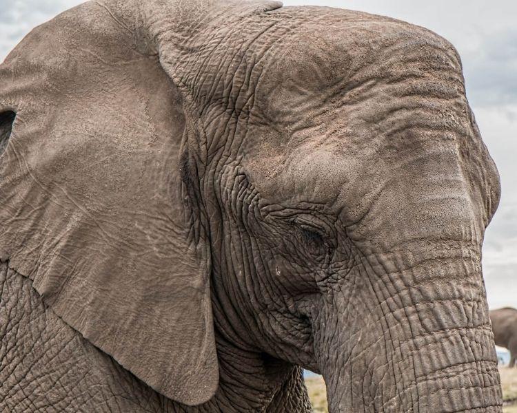 elephant name generator for a large elephant