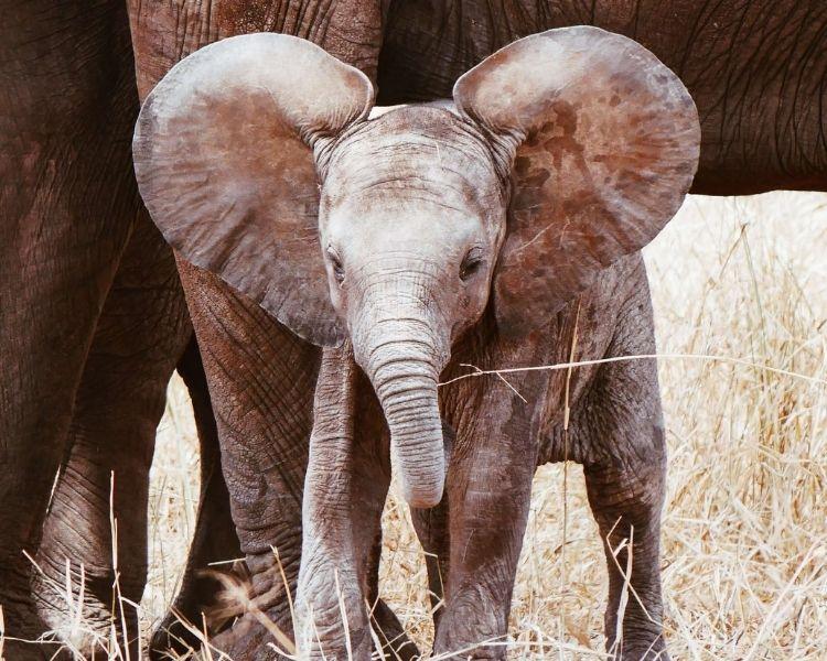 elephant name generator for a medium elephant