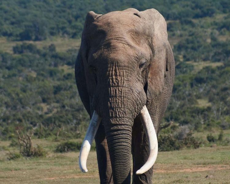 elephant name generator for an extra large female elephant