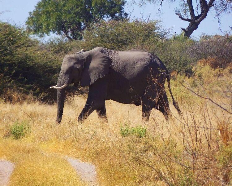 elephant name generator for a large female elephant