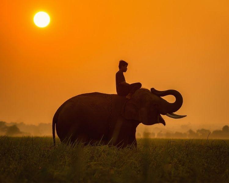 elephant name generator for a medium female elephant