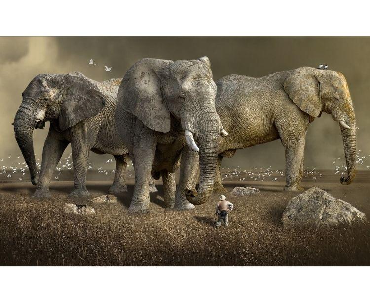 elephant name generator for a pet elephant