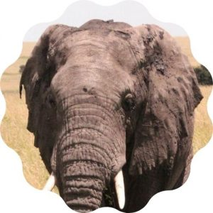 create the best elephant name in this elephant name generator