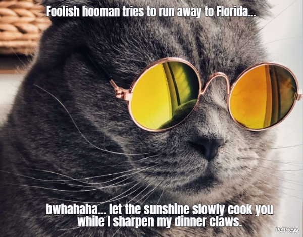 Foolish hooman tries to run away to Florida...... bwhahaha... let the sunshine slowly cook...