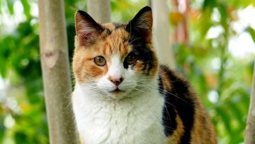 male-calico-cat-names