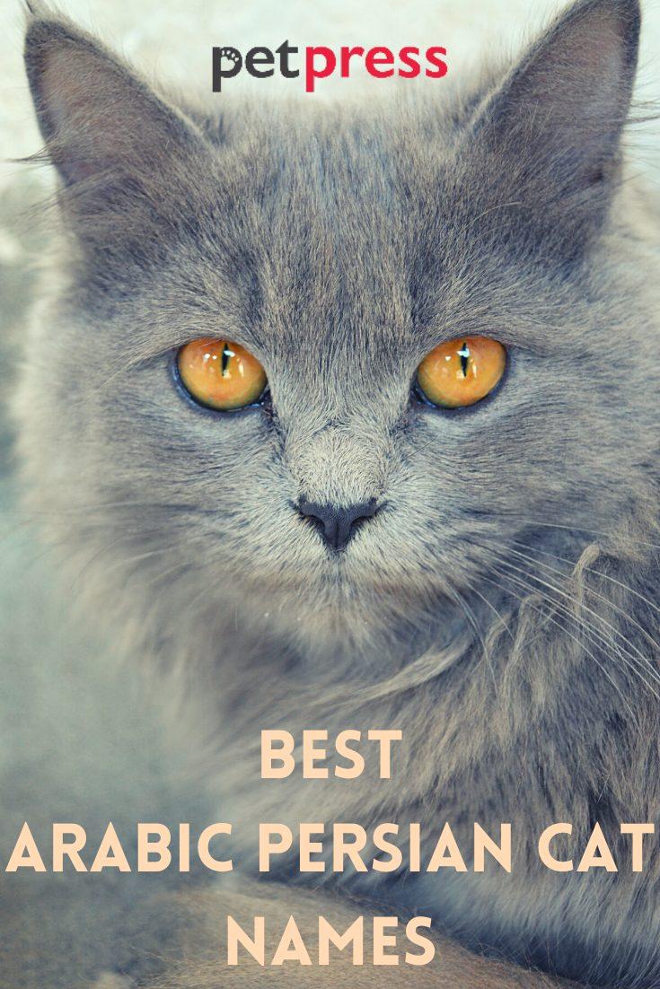 Best arabic persian cat names