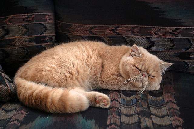 male-arabic-persian-cat-names