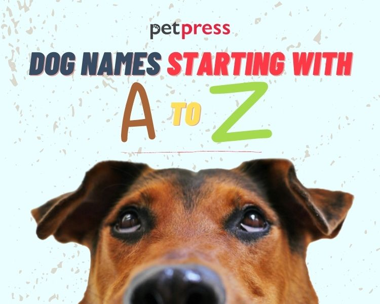 dog names starting with a to z