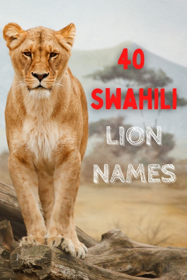 swahili lion names for naming a lion