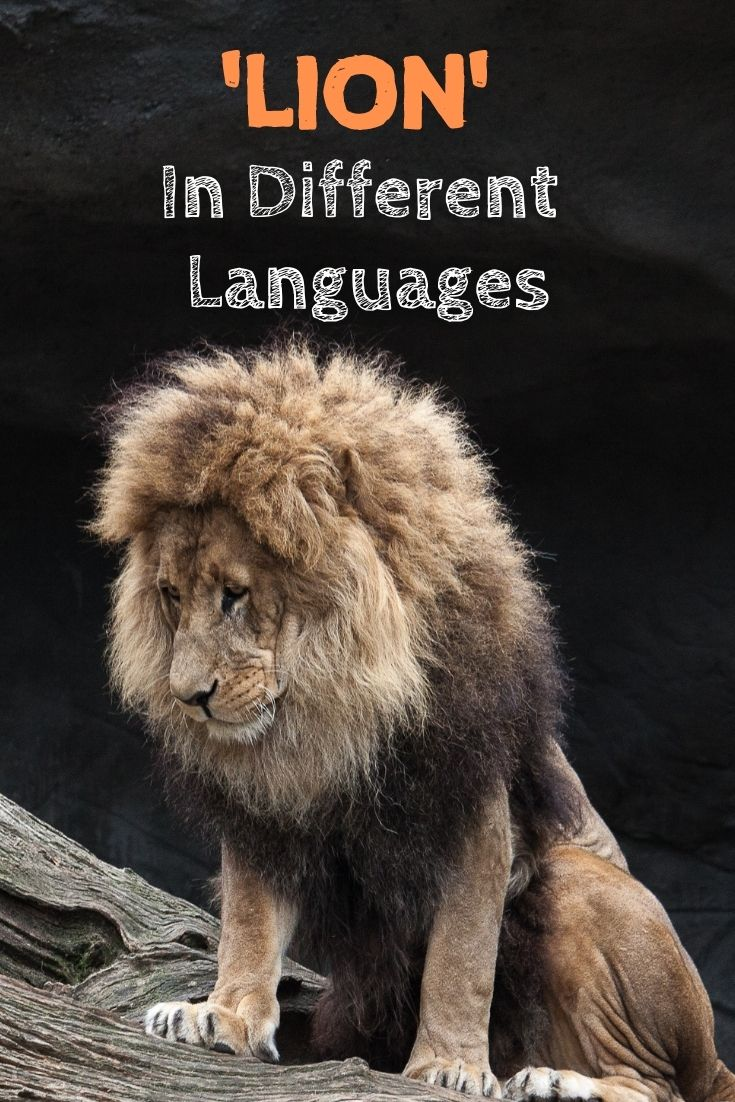 lion in different languages
