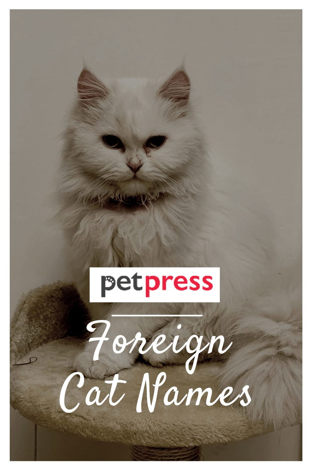 Foreign Cat Names