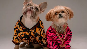 6 Stylish Ways to Dress up your Dog