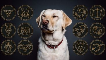 dog breed for your zodiac sign