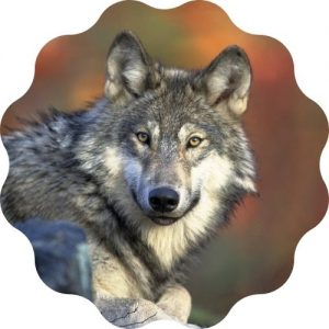 wolf name generator for naming a wolf