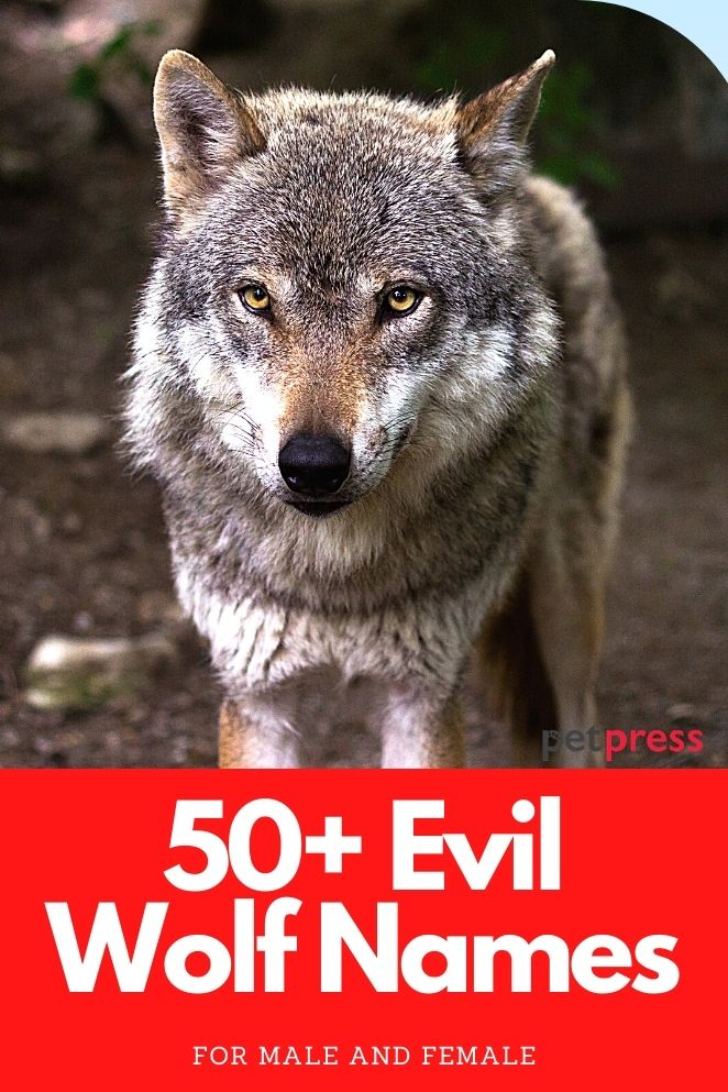 Evil Wolf Names for naming a wolf