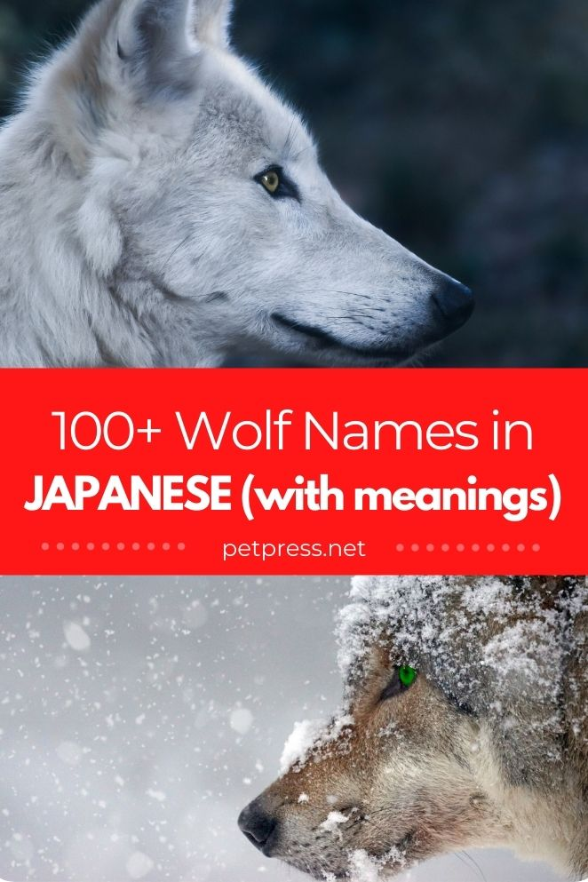 31+ Names with meaning wolf info