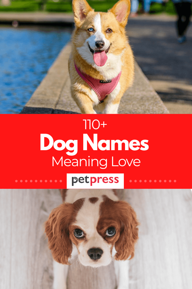 110+ Dog Names Meaning Love For Both Male And Female Dogs