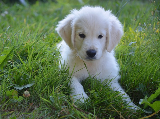 female-dog-love