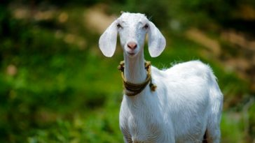 goat names in Tamil with meanings