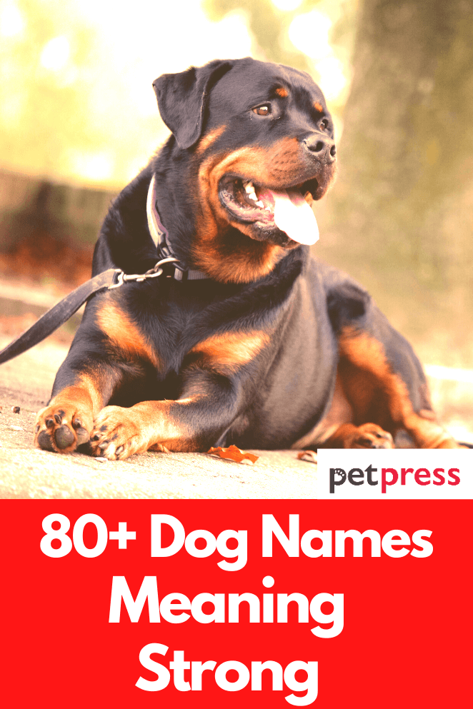 dog-names-meaning-strong