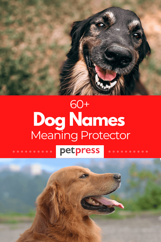 dog-names-meaning-protector (1)