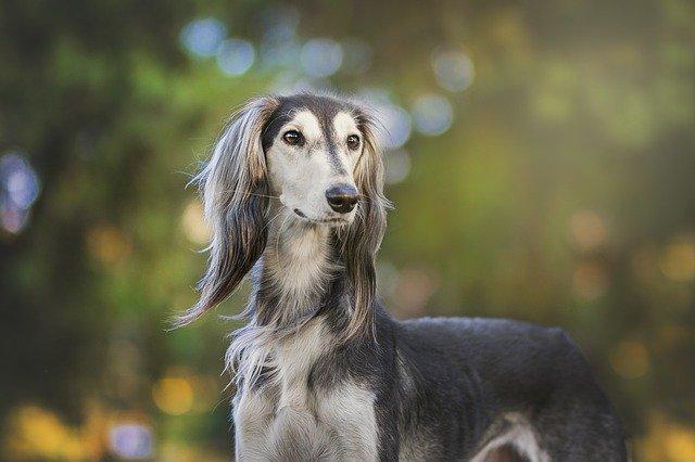 female-dog-hope