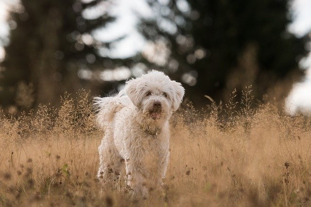 female-dog-beautiful