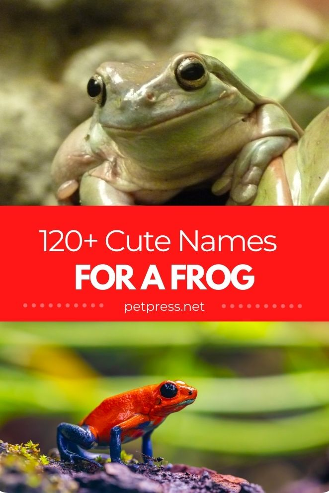 cute frog names for naming a pet frog