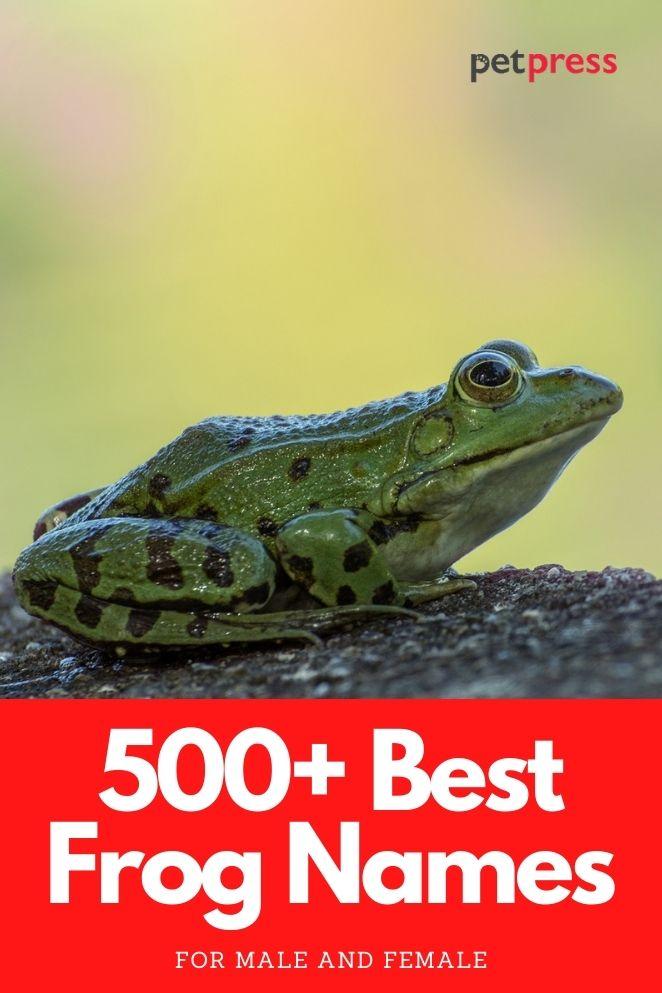 best frog names for naming a pet frog