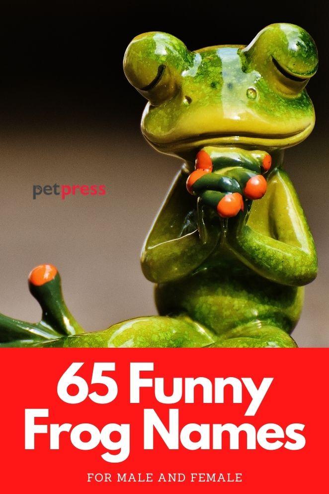 funny frog names for naming a pet frog
