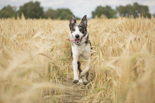 dog-hope