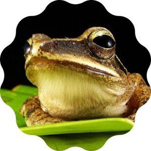 frog name generator