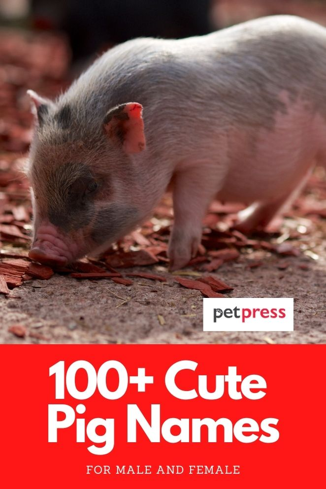 cute pig names for a piglet