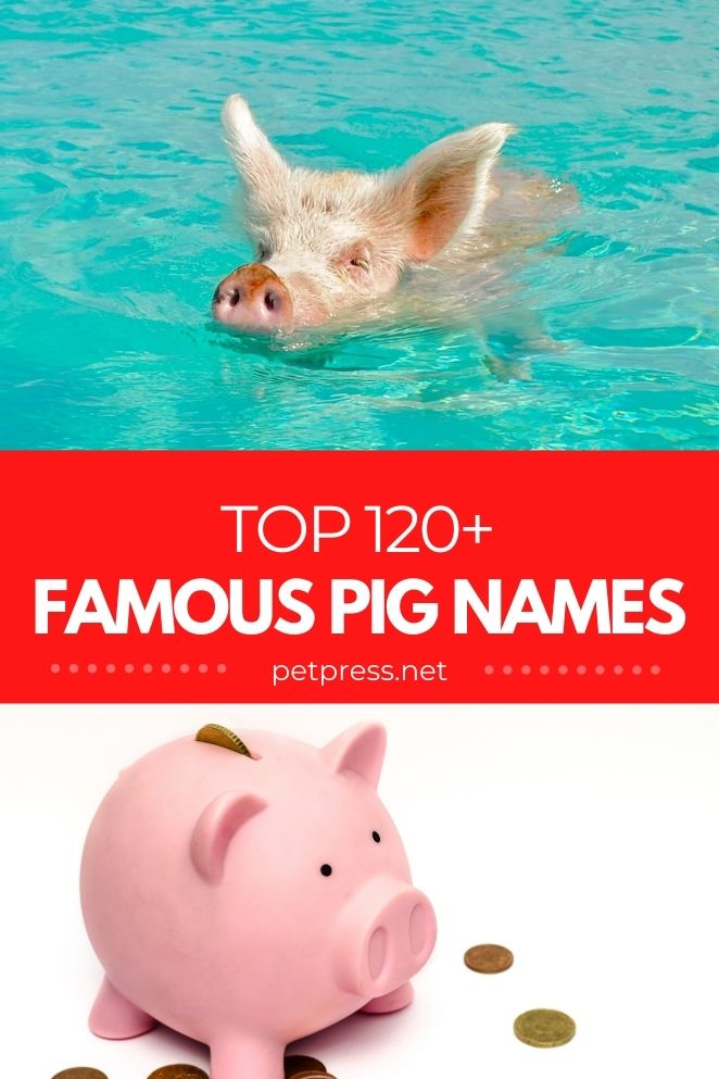famous pig names for naming a pet pig