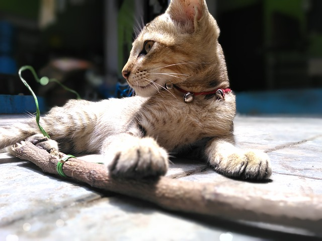male-indian-cat-name-ideas