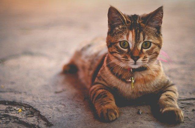 female-indian-cat-name-ideas