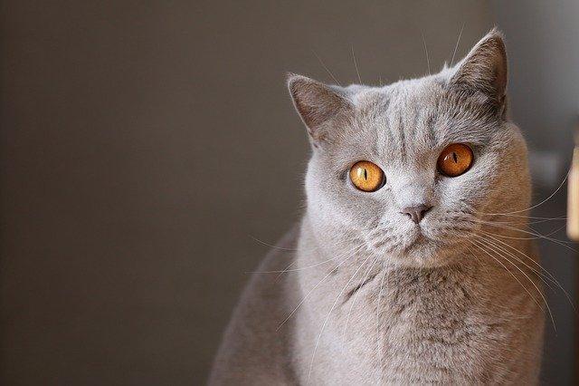 cute-indian-cat-names