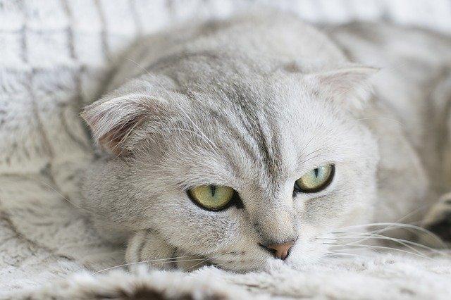 unique-indian-cat-names