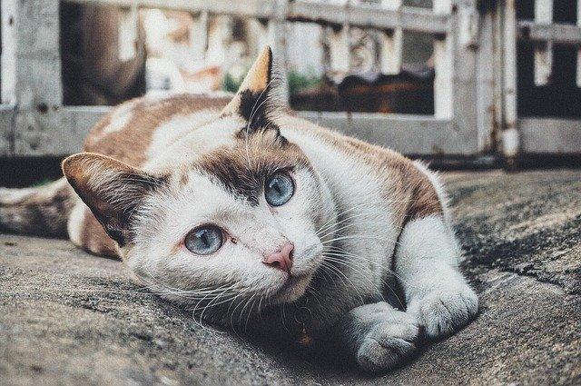unique-indian-cat-name-ideas