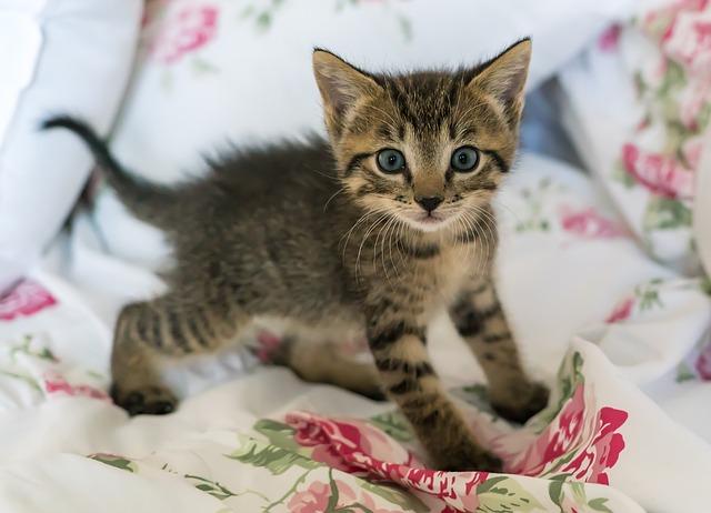 boy-cat-names