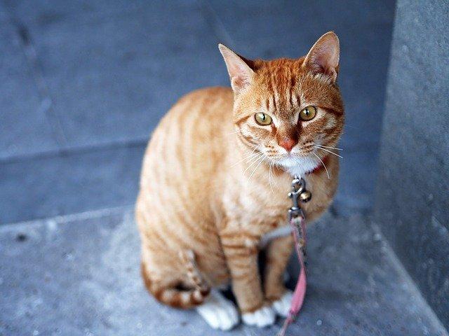 famous-indian-cat-names