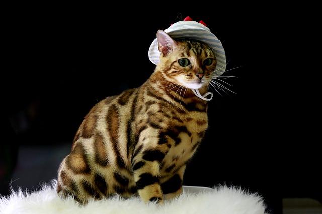 cute-bengal-cat-names